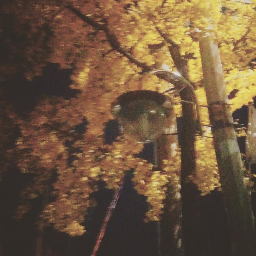 autumn night.jpg